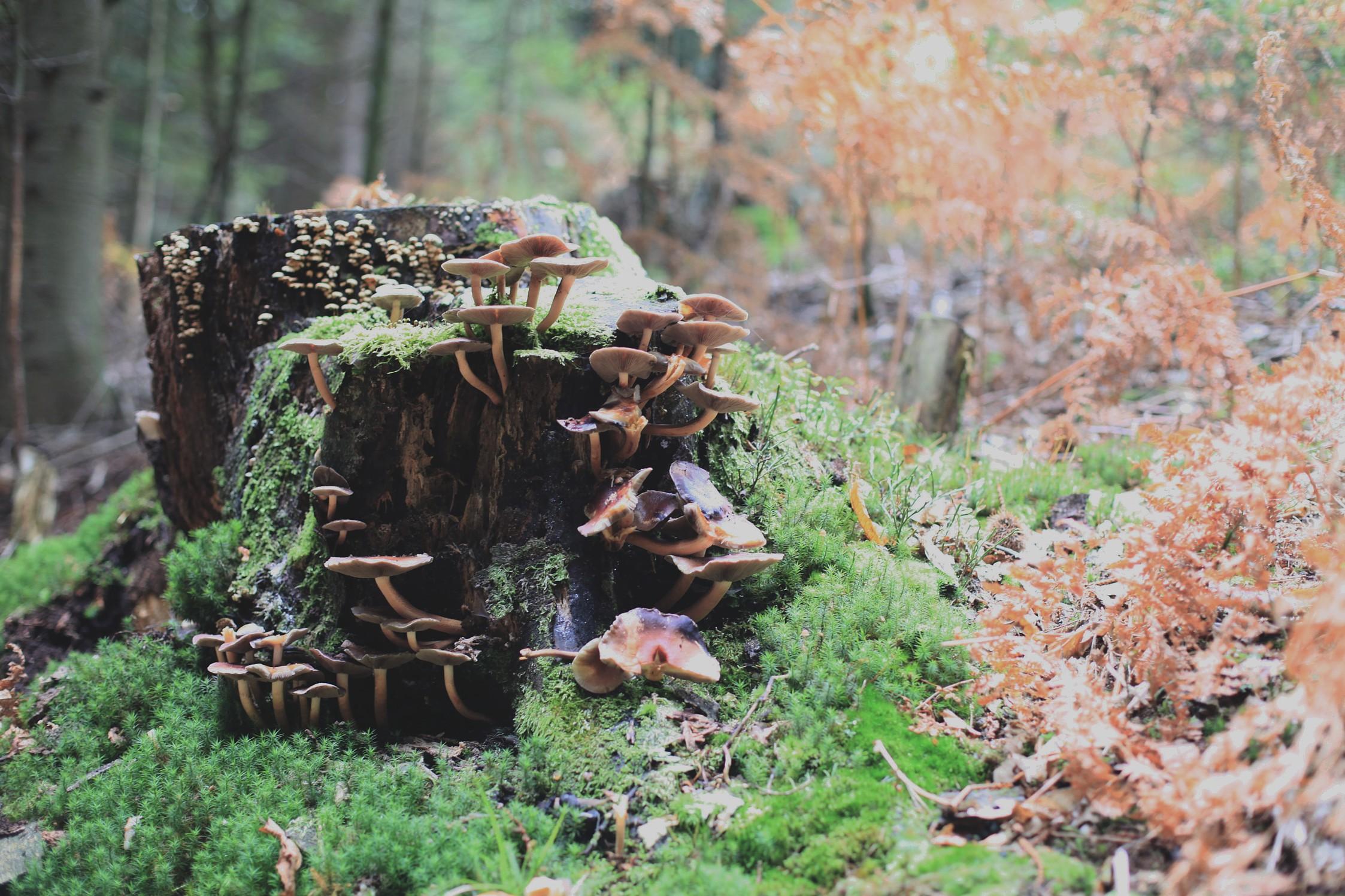gozd danes 4